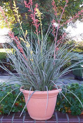 2538 Surprise Bouquet Yucca MON (Small)
