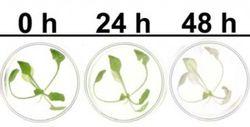 Plants colo state univ