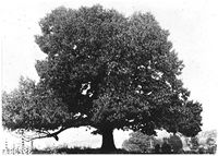 C__T A C F_PR_Images_300_broadtree
