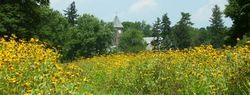 Wildflower Trail CB Duke Farms