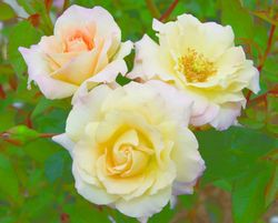 Easter Basket corrected Star Roses