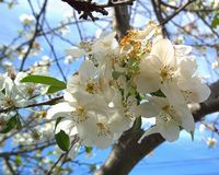 PrunusX PHS