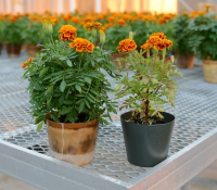 Bioplastic pots