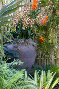 NYBG Orchid Show 2