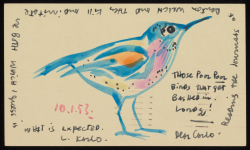 Beinecke 24 CVV_Bird_Postcards_06