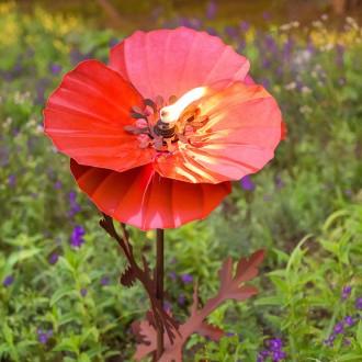 Chi botan poppy torch