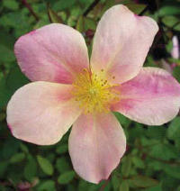 Mutabilis1 Earth Kind