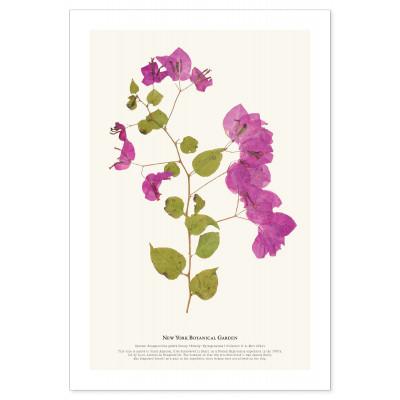 181130 NYBG Herb Print