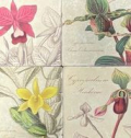 20 1211 orchid-coasters-set-of-four-7