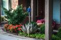 20 1211 blue_agave_torch_unique_landscaping_ideas