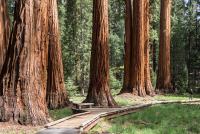 21 0130 giant sequoia grove